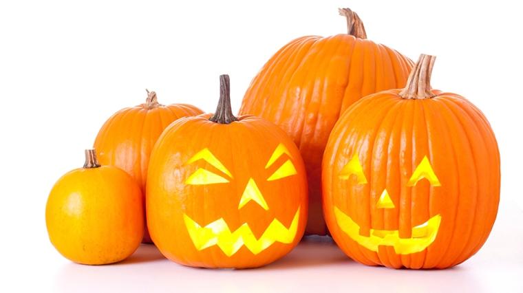 pumpkins 2.jpg